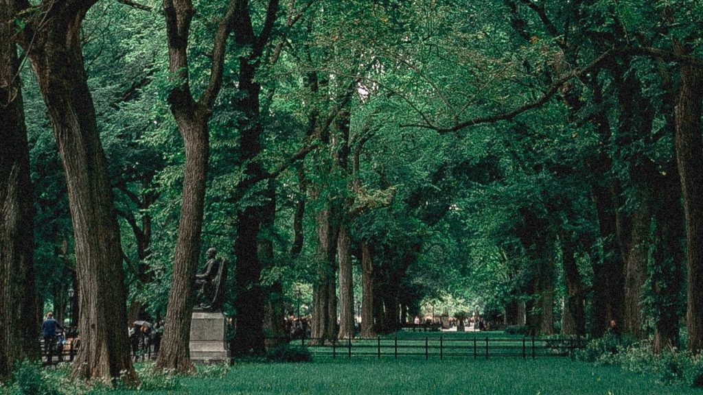 Sustainable City-Urban Forest